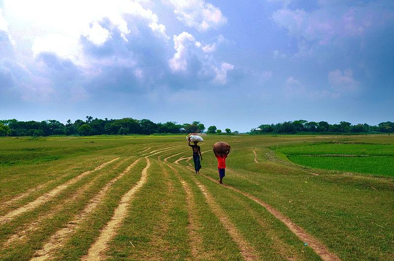 The haor region of Bangladesh. By Balaram Mahalder. From Wikimedia Commons.
